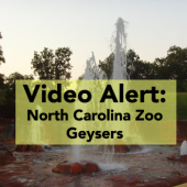 Video North Carolina Zoo Geysers