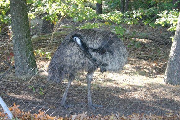 Christina Sturdivant also captured photos of an unexpected type of bird at the BWI Thurgood Airport. This Emu is just one of the many creatures you'll see along the trail.